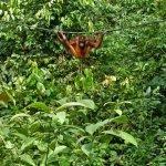 Borneo, che sogno