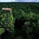 I Korowai – La tribù Indonesiana che vive sugli alberi