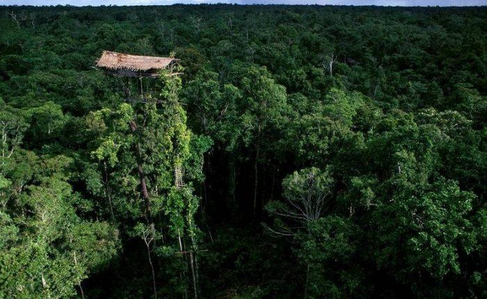 Korowai casa sugli alberi