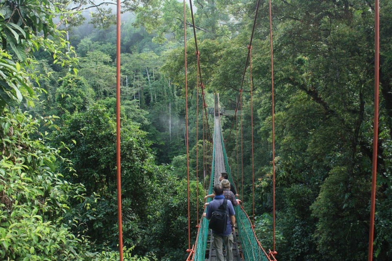 Ponte Sopseso Danum Valley, Sabah Borneo, Malesia