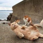 Tashirojima, isola dei gatti