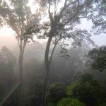Il Miglior Tour Naturalistico della Malesia