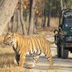 I migliori parchi dell'India per vedere la Tigre